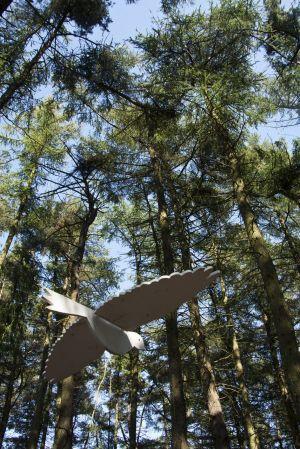 Beatherder Dove